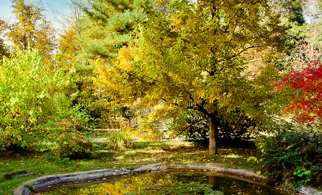 Gradina Botanica din comuna Macea - flickr