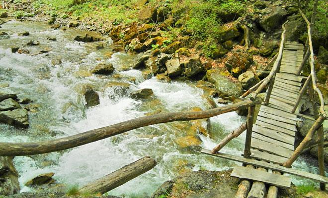 rezervatia-tisita-din-comuna-tulnici-flickr