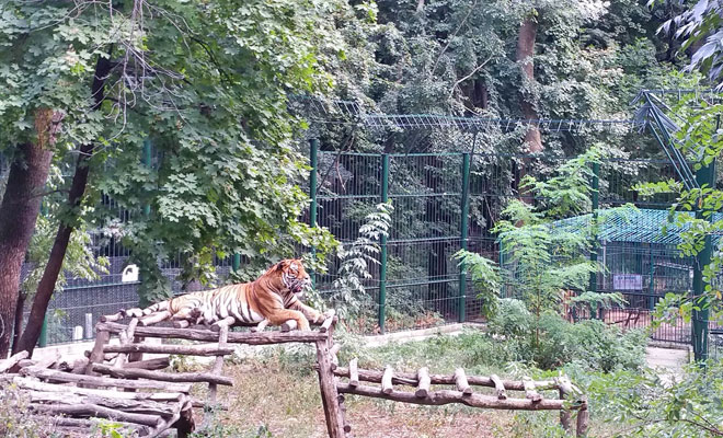 gradina-zoologica-din-orasul-barlad-turismbarlad