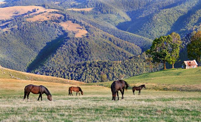 Parcul Natural Cindrel din judetul Sibiu - flickr