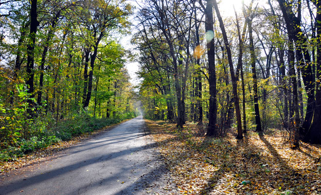 Padurea Snagov din comuna Snagov judetul Ilfov - flickr