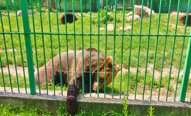 Gradina Zoologica din orasul Pitesti - flickr