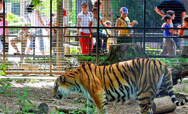 Gradina Zoologica din Bucuresti - flickr