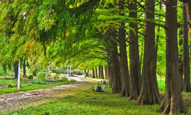 gradina-botanica-alexandru-buia-din-orasul-craiova-flickr