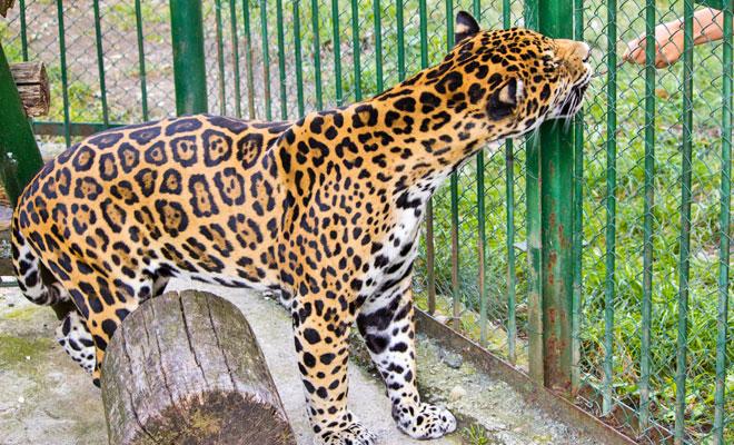 gradina-zoologica-din-orasul-sibiu-flickr