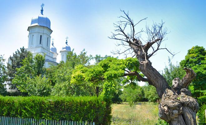 manastirea-saon-din-comuna-niculitel